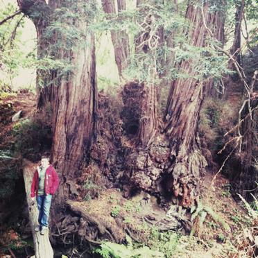 Owen vs the redwoods
